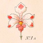 PHOTO: Closeup of orchid illustration.