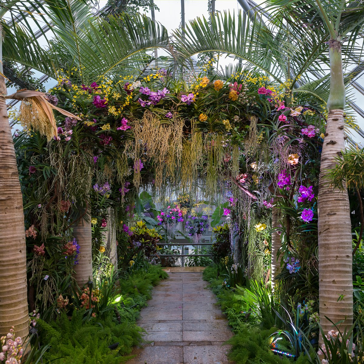 Designing the 2017 Orchid Show My Chicago Botanic Garden