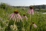 Prairie in June