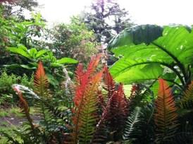PHOTO: Pukupuku, or common rasp fern.