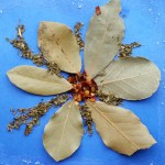 PHOTO: Spice holiday card: poinsettia.