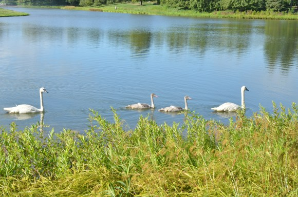 Mom, dad, and the kids going for a paddle around the Garden Lakes