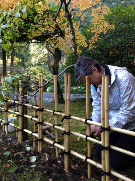 PHOTO: Tying ibo-musubi knots on the tea garden fence.