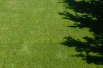 expanse of green turf grass