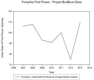 forsythia data