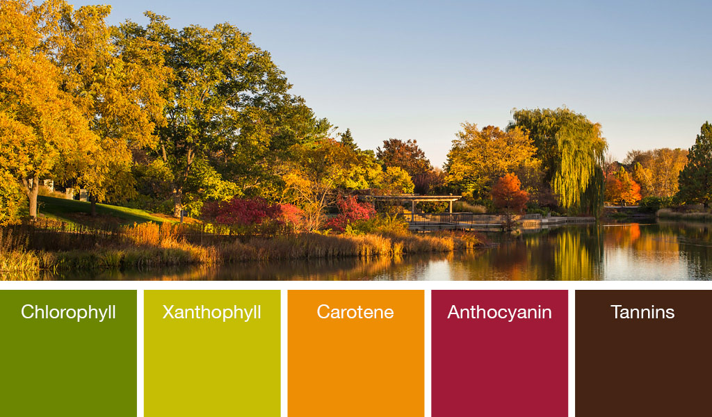 Fall Color at the Garden