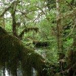 PHOTO: Rainforest.