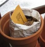 thumbnail seed