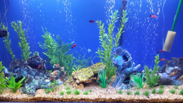 Concept Design Home: Fish Tank Background Pictures