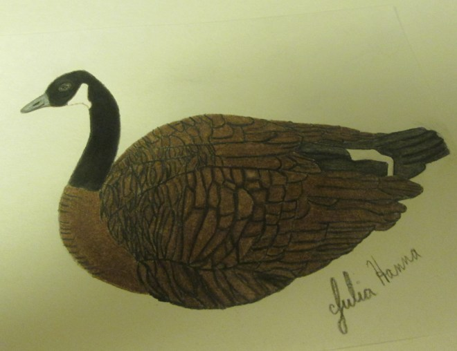 I finished coloring in the primarily brown feathers on the Canadian goose. The neck was black, and there were white feathers on the face and near the tail area.