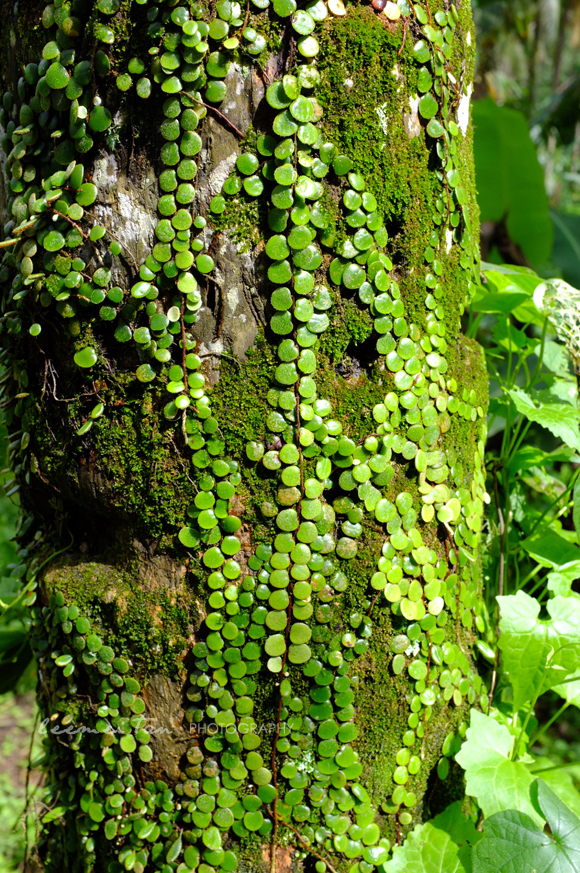 pretty-leaves-on-tree-trunk