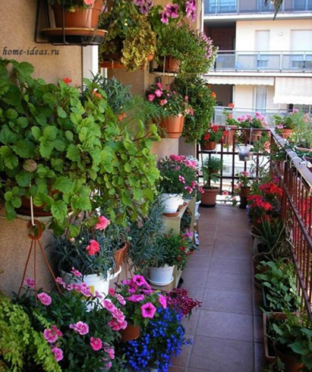Balcony Gardens Sydney Best Balcony Design Ideas Latest