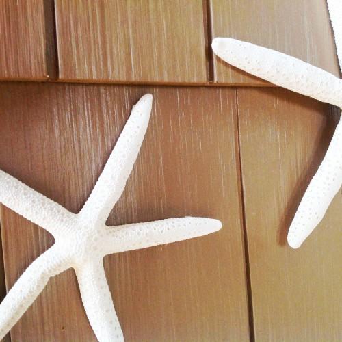 Two Starfish - My Dear Irene