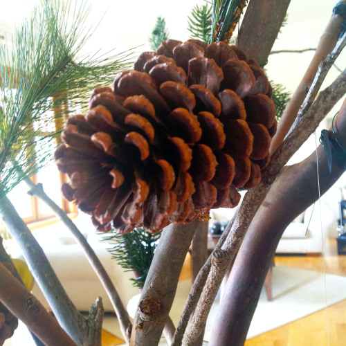 Pinecone - mydearirene