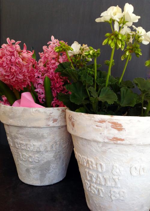 Flower Pots - mydearirene