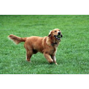 Peculiar Most Loyal Dog Breeds Most Loyal Dog Breeds My Dot Comrade Most Loyal Dog Breeds Uk Most Loyal Dog Breeds List