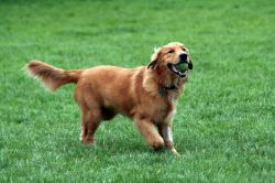 Small Of Most Loyal Dog Breeds