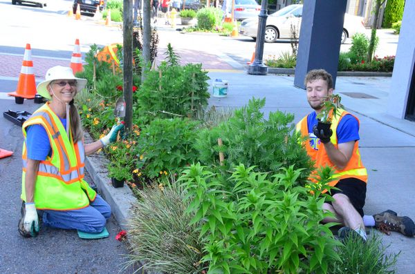 Floretum member Janice Carr assists Edmonds Parks groundskeeper Andrew Terry in planting the corner park at Fifth and Dayton.