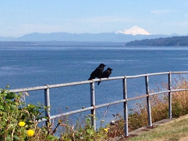 Larry Vogel spotted these two crows perched along Sunset Avenue, checking out Mount Baker Wednesday morning.