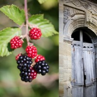 From the ruins come the sweetest berries