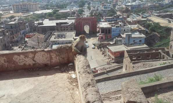 backpacking in Jaipur