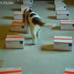 Studying Hard For Our ORT Test | GBGV | FitDog Friday