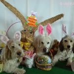 Happy Easter 2014 | GBGV