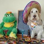 Fiesta to Siesta | GBGV | Monday Mischief