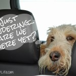 Road Trip To #BlogPaws | Wordless Wednesday