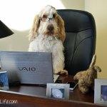 Pet Blogger Challenge 2015