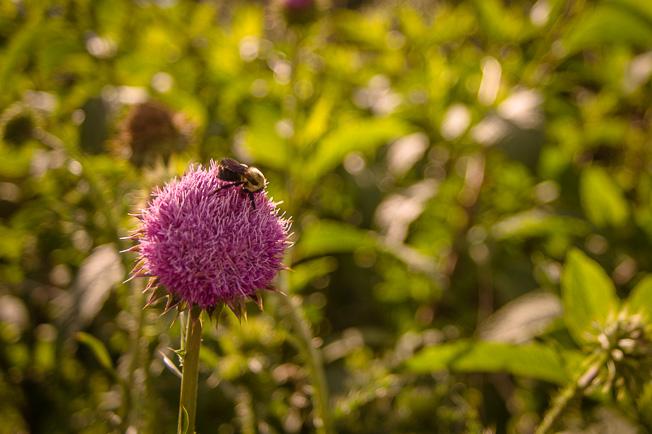 20131213_DawnCamp_flowerbee