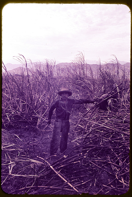 Vom Ruß schwarz gefärbter Zuckerrohrarbeiter in Casa Grande