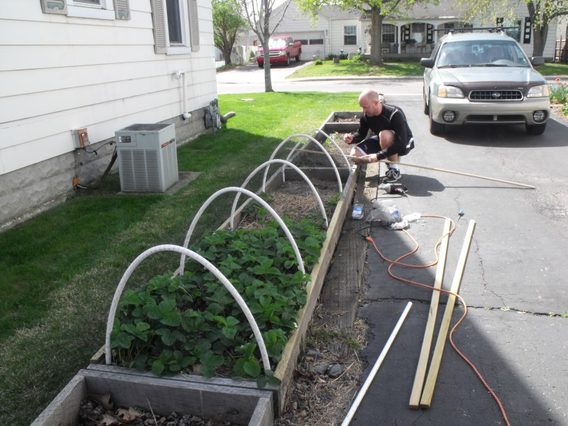 Large Of Pvc Pipe Gardening Projects