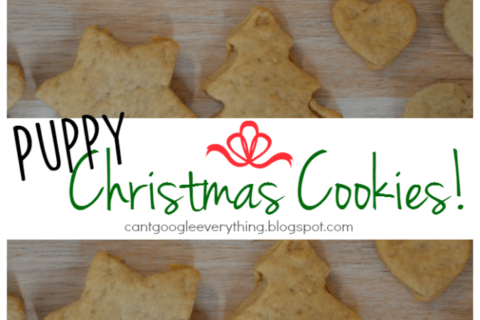 Christmas Cookies for Your Dog!