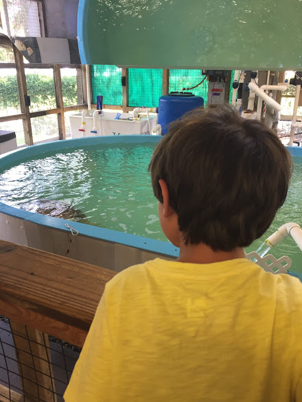 turtle rescue center looking in