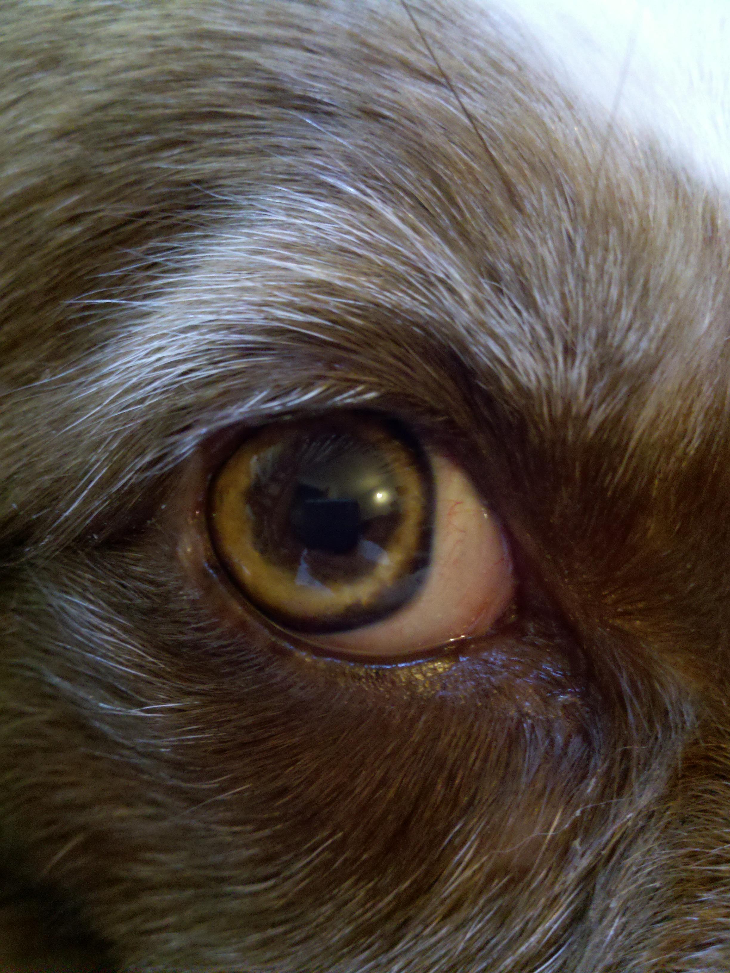 Fullsize Of Dogs Eyes Are Red