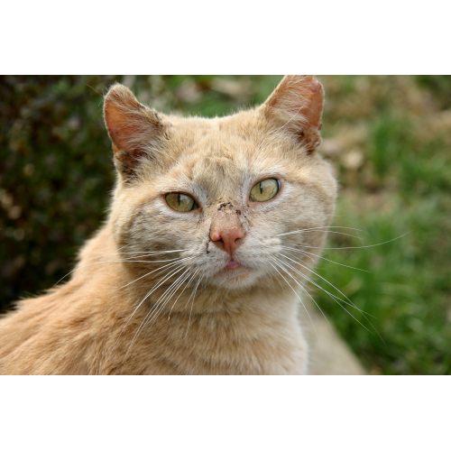 Medium Crop Of Scabs On Cat