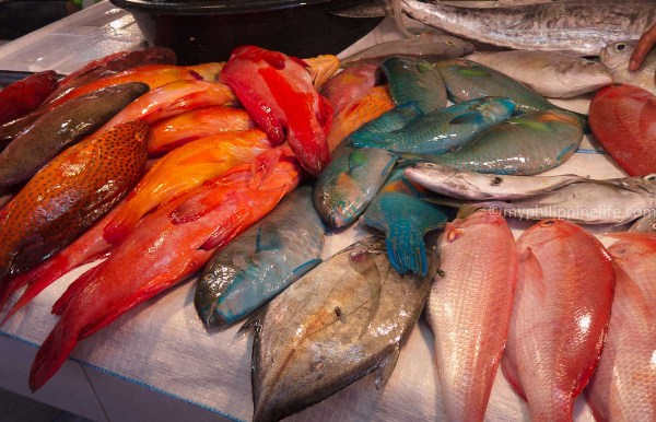 Fresh grouper and other reef fish
