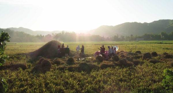 A beautiful vista of rice being harvested in Ajuy, Iloilo on our way back to Iloilo City