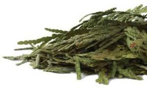 cedar_leaf-product_1x-1403630804