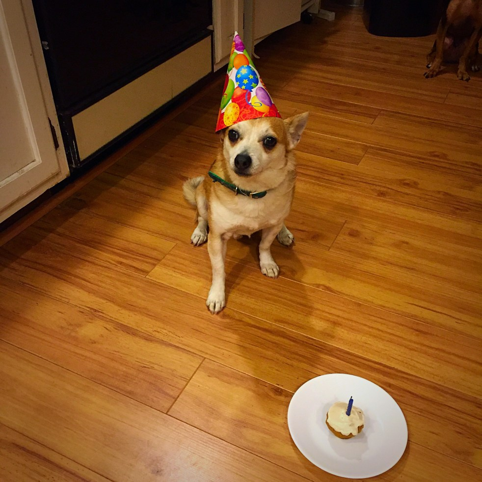dog's birthday