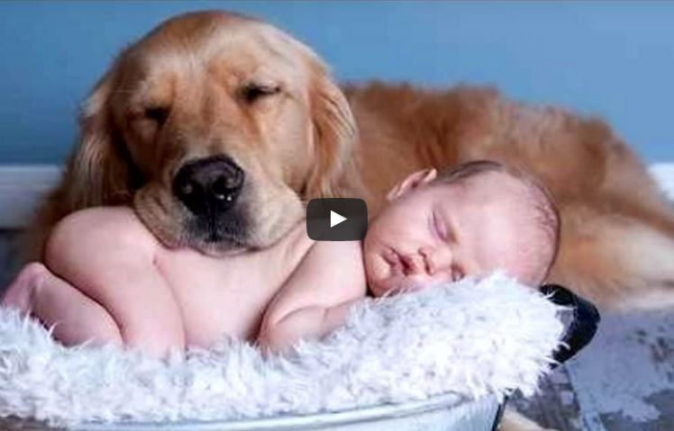 Cats And Dogs Love Babies