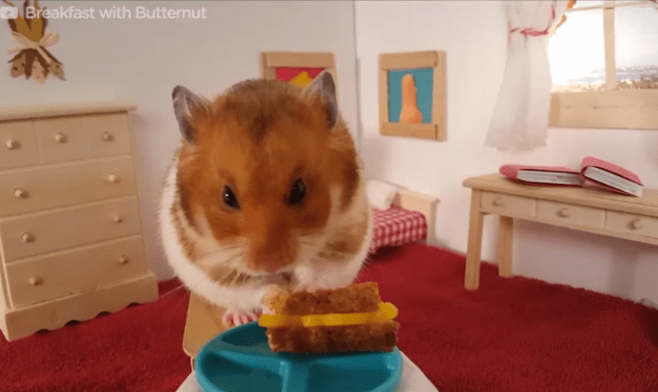 Adorable Hamster Loves To Eat All Kinds Of Foods