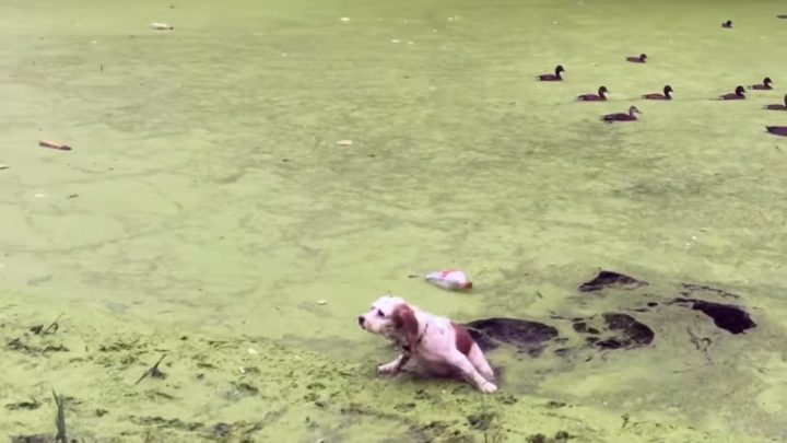 Digby Learns The Difference Between Grass And Algae
