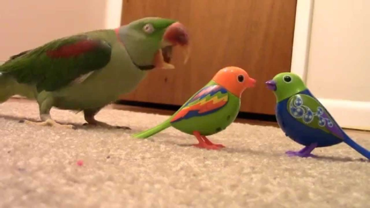 Parrot Attacks Fake Birds