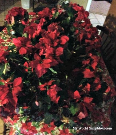 amy poinsettia