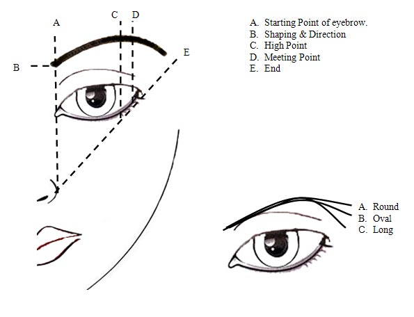 The perfect brow eyebrow tutorial mz mahogany chicmz mahogany chic start by using your pencil to draw your desired under arch from the inner brow toward the outer brow reference diagram point b to point e ccuart Gallery