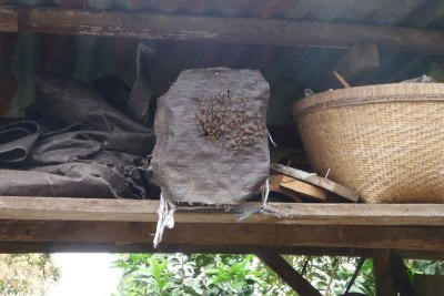 Protecting the Bees from Marauders Requires Innovation. In This Case a Concrete Block is Wrapped to Protect a Hive.