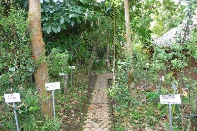 A Pleasant Stroll Through the Herb Garden is an Education