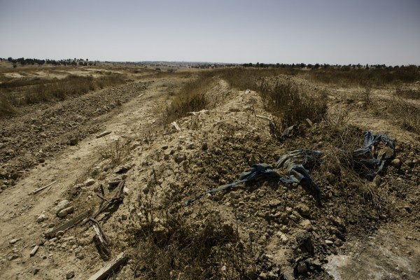 Initial planting of a new forest by the Jewish National Fund on the land of al-'Araqib village has begun (photo by Mati Milstein)